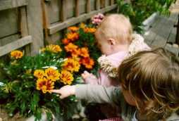 nursery school gardens toddlers viewing flowers